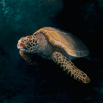 Green Sea Turtle (Oil)