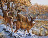 Indiana Whitetails (Oil)